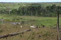 Rainforest and pasture