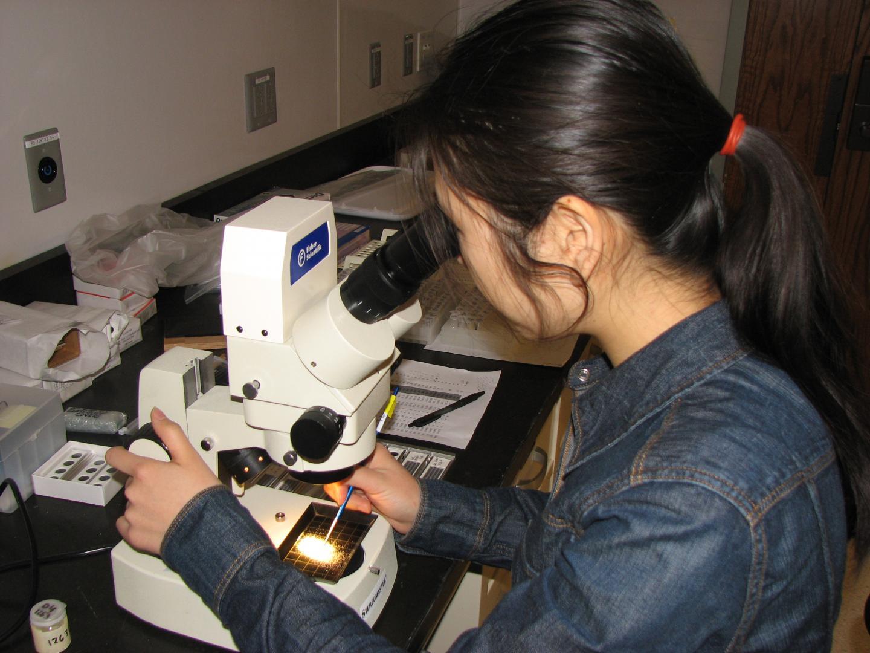 Assistant Professor Zunli Lu