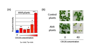 Figure 2. Detection of PCB (CB126) using transgenic plants with introduced AhR gene
