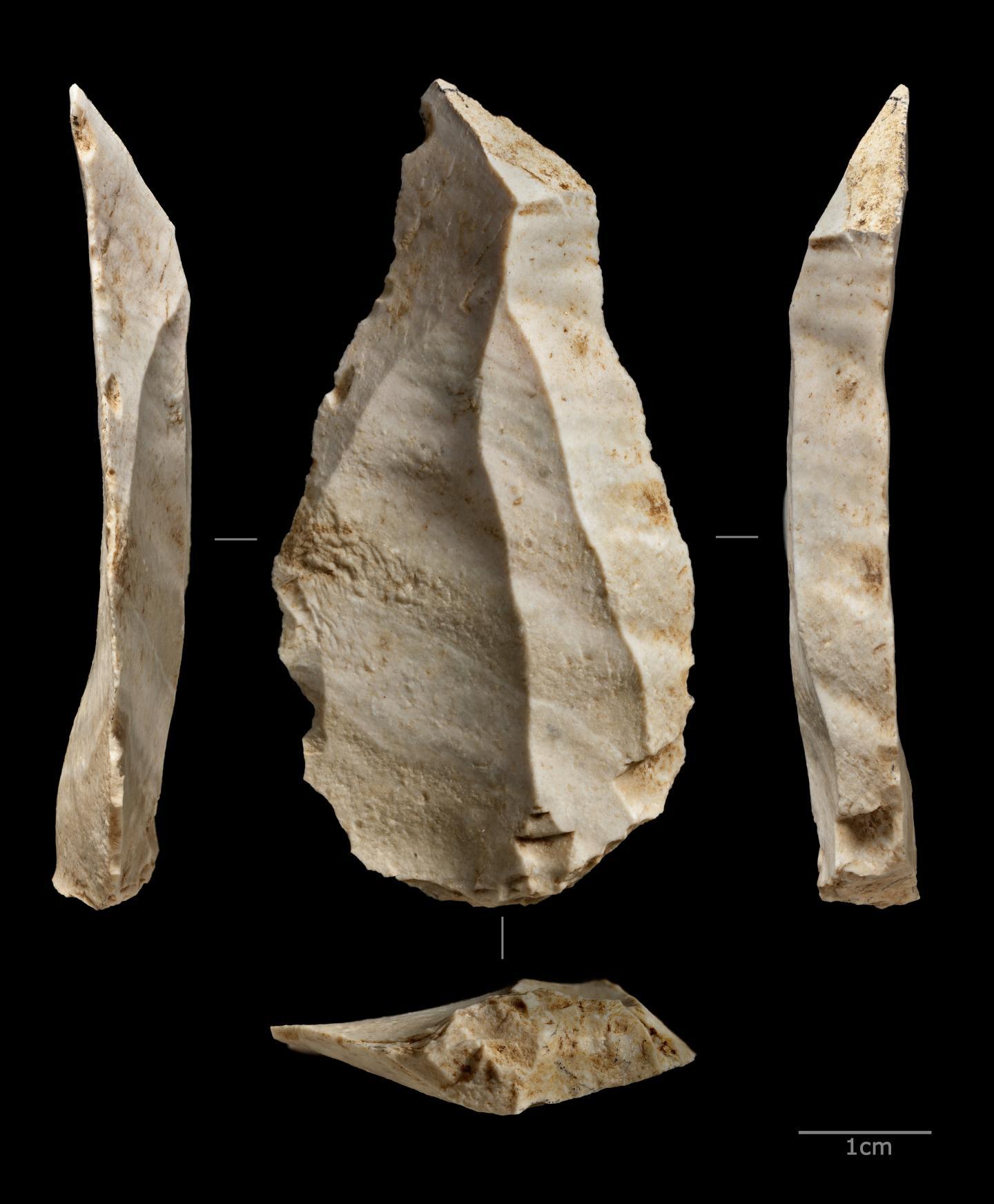 Crustacean Fragments