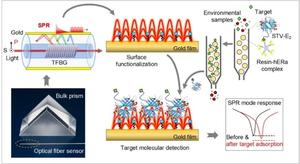 Plasmonic optical fiber biosensor using human estrogen receptor α for ultrasensitive environmental estrogens detection
