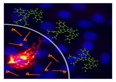 Broad-Spectrum Antiviral Probes