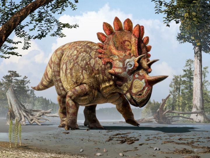 <i>Regaliceratops peterhewsi </i>Reconstruction