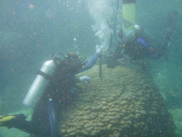 Collecting coral samples in the waters off Oman
