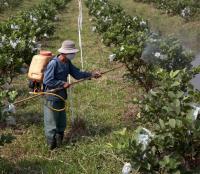 Man Spraying Crops with Antibiotics