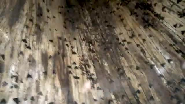 Hundreds of moths assemble in hollow tree