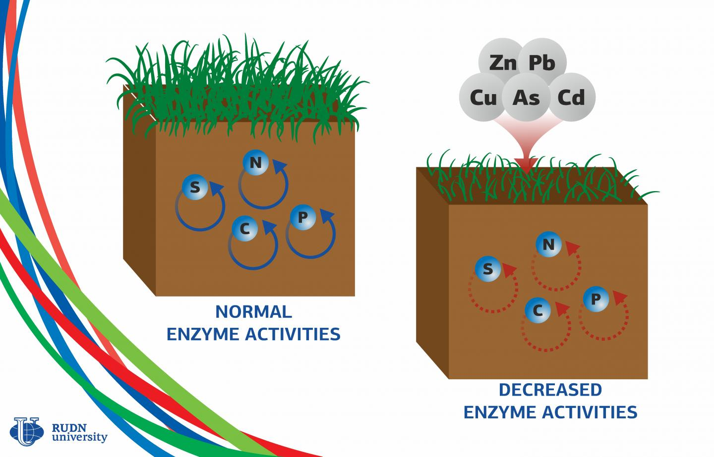 Heavy Metals Make Soil Enzymes 3 Times Weaker, Says a Soil Scientist from RUDN University
