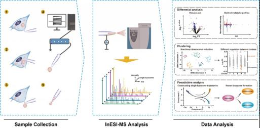 Metabolomic profiling of single enlarged lysosomes