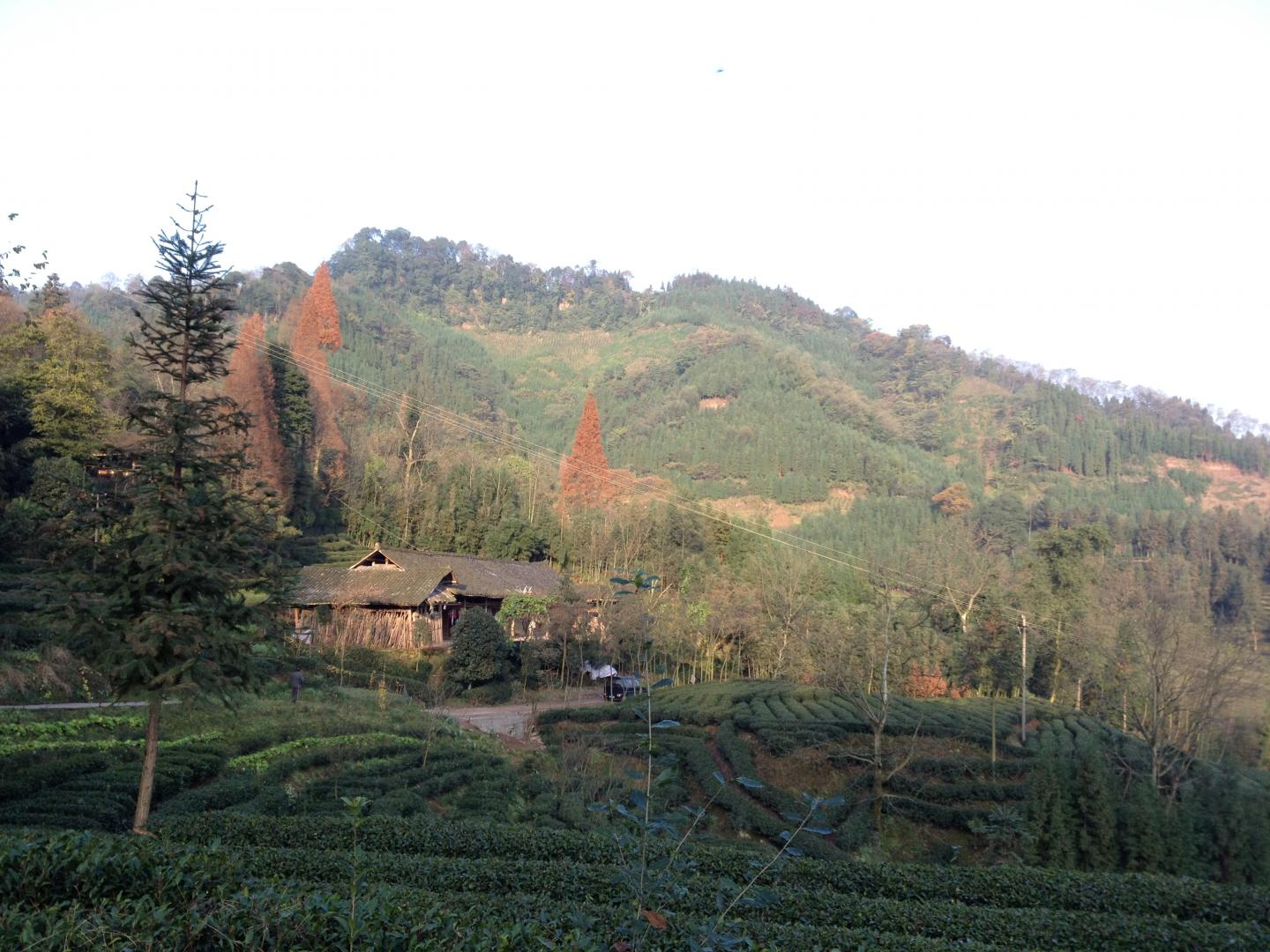 Collectively Owned Land in Sichuan Province, China
