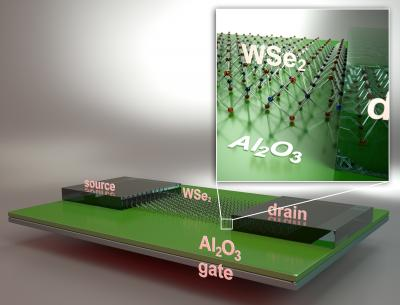 Illustration of FET Fabricated Using Monolayer WSe2