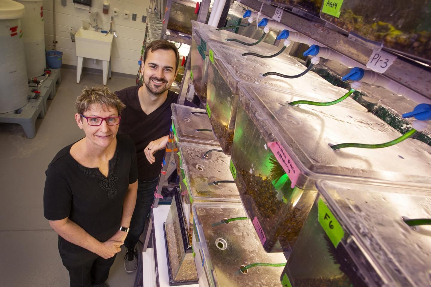 In Guppy Courtship, the Unusual Male Wins