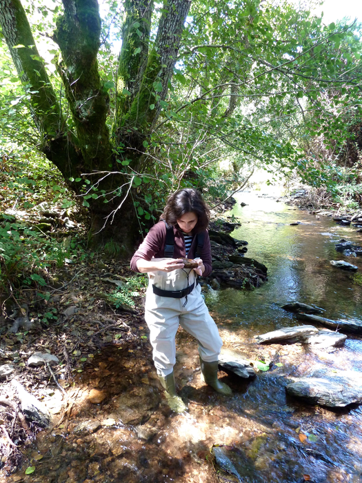 Studying the functioning of river ecosystems