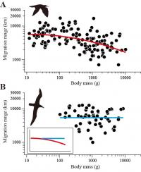 Migration Range as a Function of Body Mass for Flapping Birds and Soaring Birds