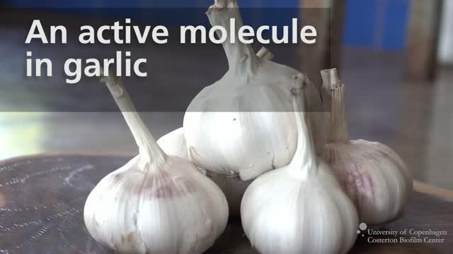 Garlic Can Help Treat Chronic Infection