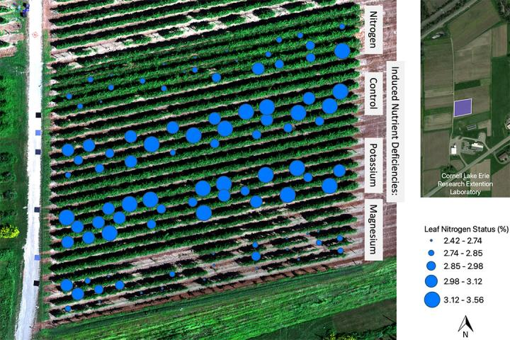 Average nitrogen levels in vineyard block