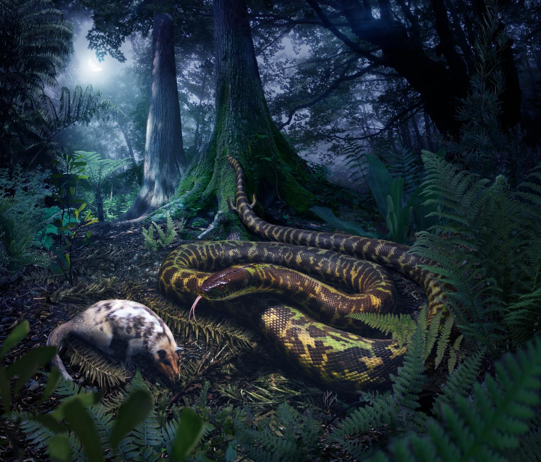 Ancestral Snake