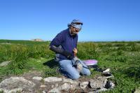 Measuring a Juvenile African penguin