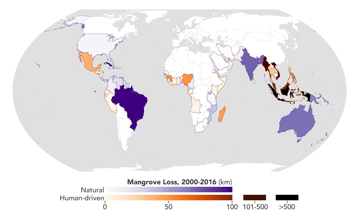 Map of Global Mangrove Forest Loss