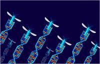 Defining gene drive