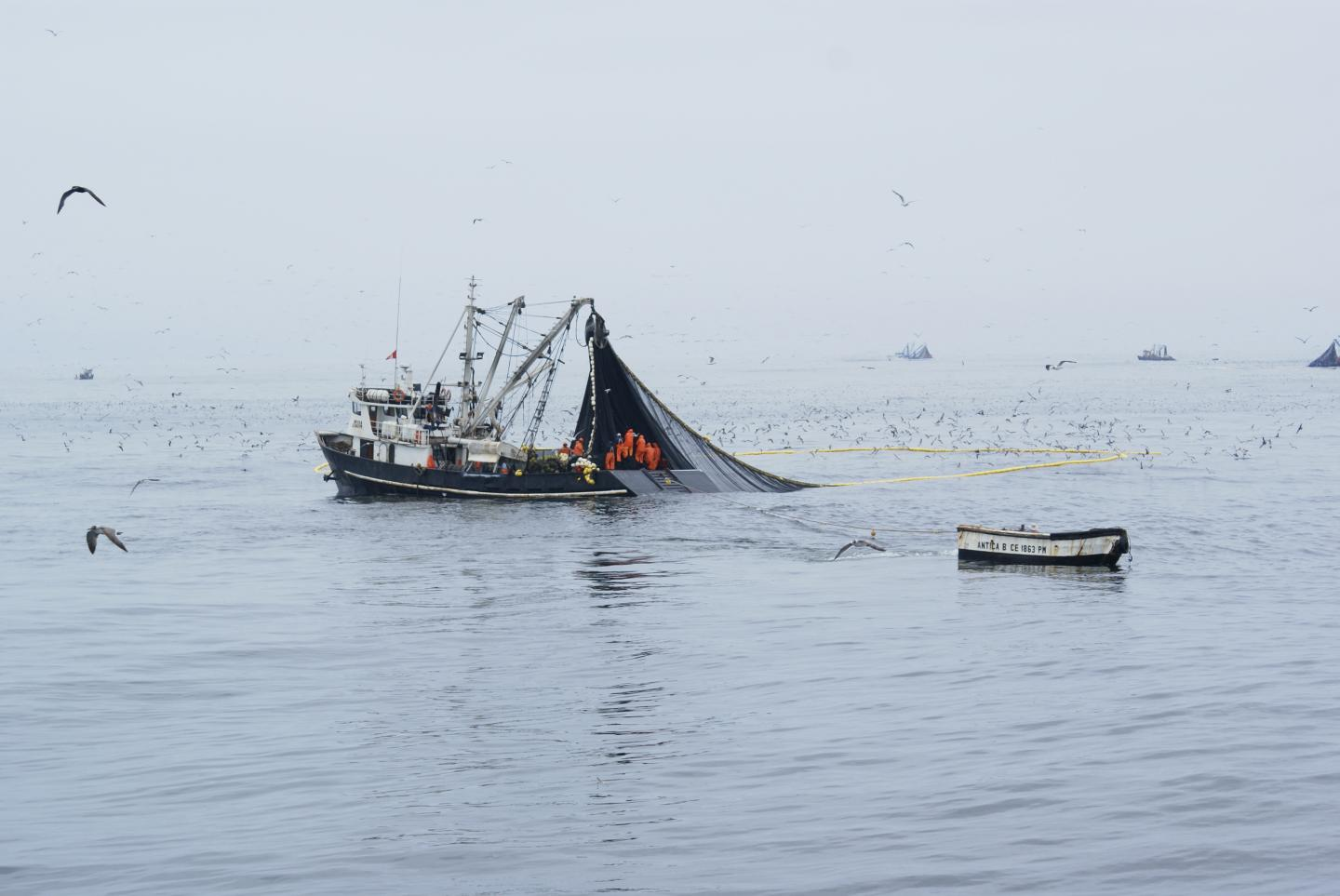 Peruvian Industrial Purse Seiners in Full Activity of Anchovy Fishing