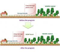 Hidden Costs of Re-Establishing a Forest