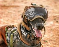 Canine with Hearing Protection and Goggles