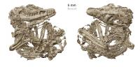 The Holotype of Origolestes lii in Ventral (Left) and Dorsal (Right) Views