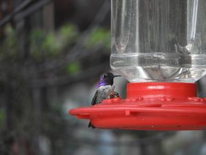 hummingbird and bee sharing