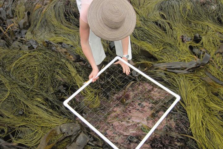 Algae survey