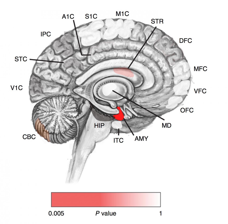 Post-Zygotic Autism Mutations in the Prenatal Brain