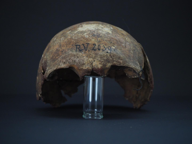Skull of RV 2039