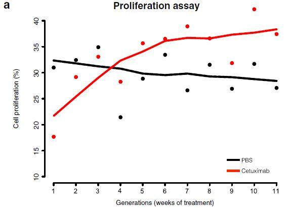 Proliferation Assay