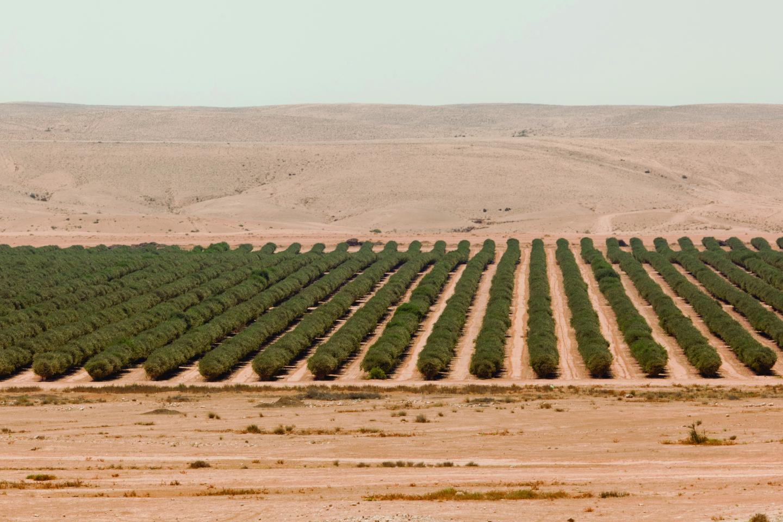Farm in Israel using Drip Irrigation