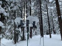 Mountain Chickadee Year-Round High-Elevation Feeders