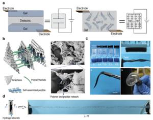 Design, characterization and mechanical properties of SHARK
