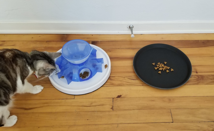 Cat eating from a tray