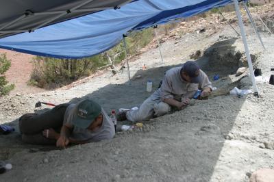 Excavating a New Dinosaur