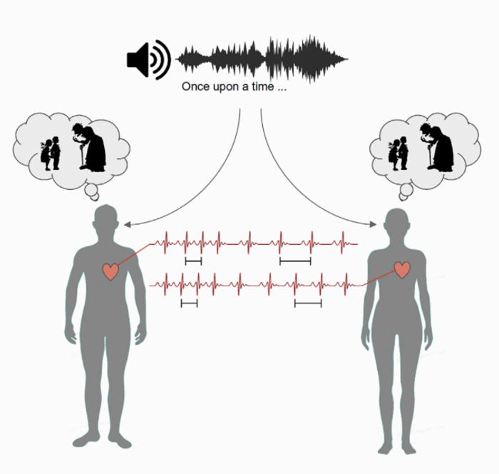 Stories lead to heartbeat synchronization