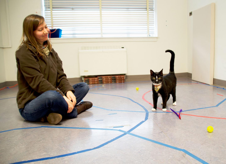 Cat Secure Attachment