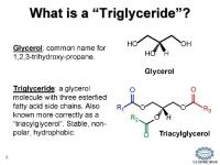 What is a Triglyceride