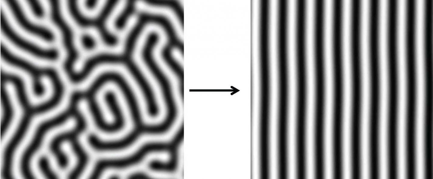 Simulations of Turing Stripes