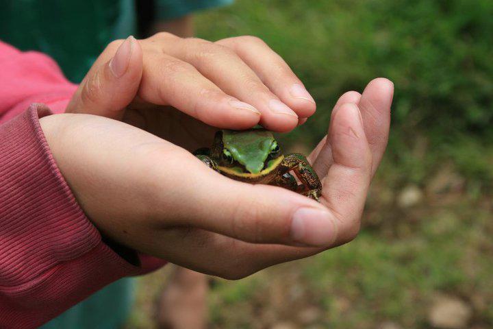 Wildlife Conservation in Good Hands?