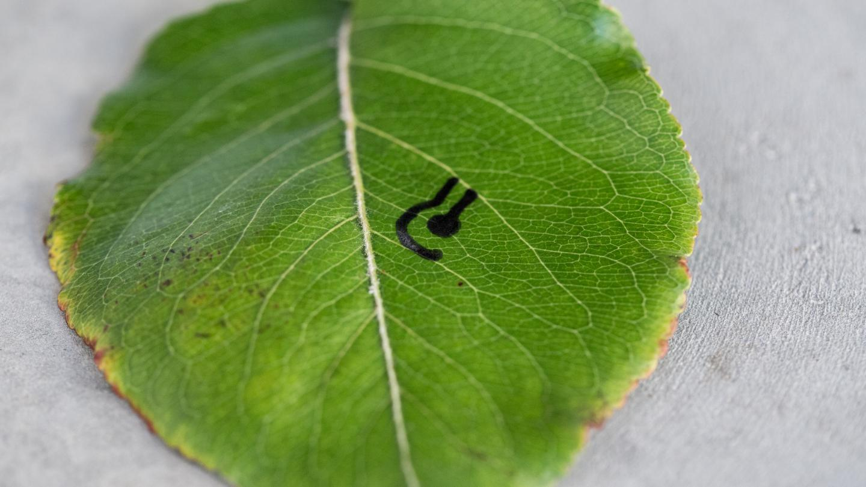 Sensor on Leaf Close Up