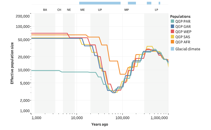 a Effective population size over time, inferred using SMC++