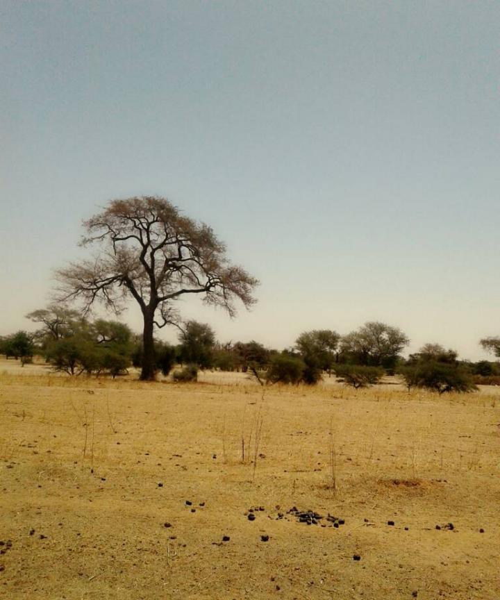Diakhao, Senegal - Sahel