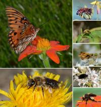 Insects Attracted to Wildflowers