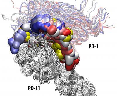 Protein=Protein Interaction