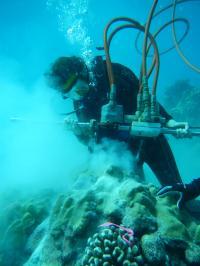 Kim Cobb drills into corals