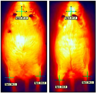 Heat Image 4 Months After Injection