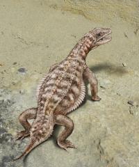 <i>Eusaurosphargis dalsassoi</i>